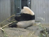 パンダ景気にあやかりたい・・・!